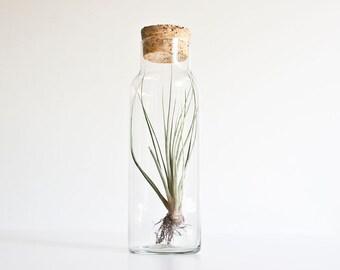 Vintage Modern Glass & Cork Storage Jar