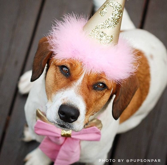Pink And Gold Dog Birthday Hat Baby