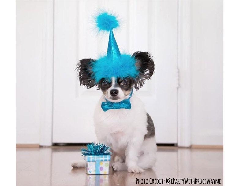 Dog Birthday Hat Blue