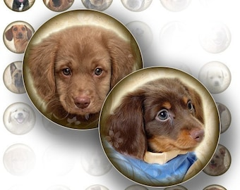 Dogs and puppies bottle cap size 1 inch circles digital collage sheet  for jewelry making paper supplies altered art download file (069) BUY 3 GET 1 as a GIFT