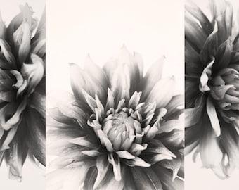Set of 3 Botanical Flower Photo Printables. Black and White Dahlia Photos. Modern Farmhouse Decor, Instant Download, Set of 3 Photo Prints