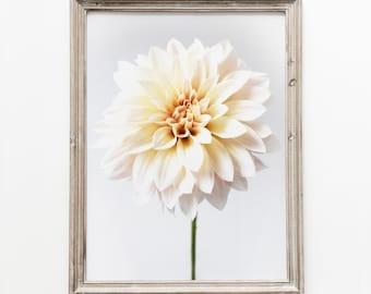 Printable Floral Photo Wall Decor. Café au Lait Dahlia Flower. Neutral Color Palette Decor Print. Modern Farmhouse DIY Instant Download