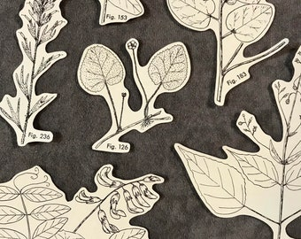 Botanical Illustration Collage Cut-Outs