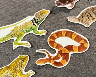 Reptiles and Amphibians Collage Cut-Outs
