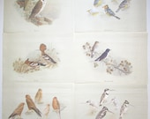 Set of 6 BIRD PRINTS by Simon Colburn Ready to Frame and Enjoy 1978 Paper Ephemera Instant Artwork Nooiensuil (owl) Greater Kestrel Hoep