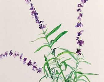 Blue salvia watercolor small giclee floral print, beautiful lavender-blue flowers, 5x7 inch BLUE matte
