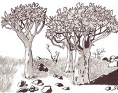 Quiver Tree Forest  - Namibia - 6 x 4  original ink paining