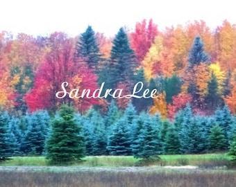 FINE ART photograph autumn in northern Michigan 8 X 10