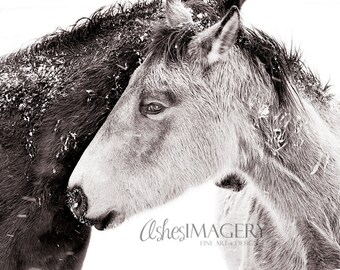 Black and White Horse Art   The Lovers   Fine Art Nature Photography    Horse Art