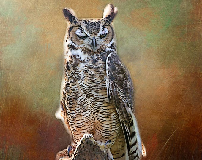 Sylvester the Great Horned Owl