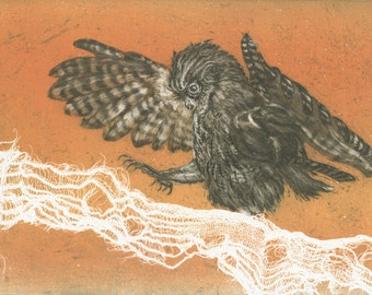 Western Screech Owl, original fine art etching