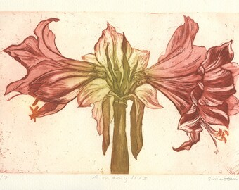 Red Amaryllis, Aquatint Etching