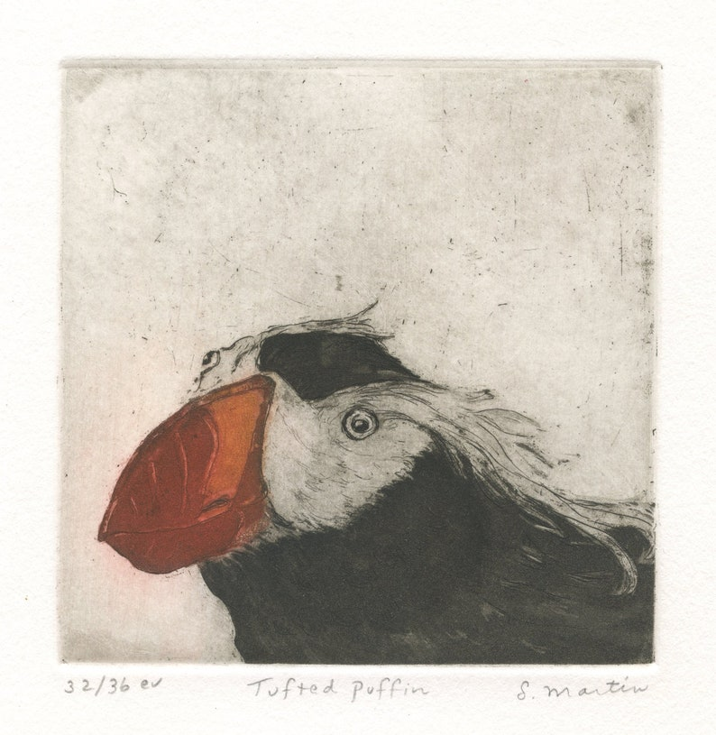 Fine Art Etching of Sea Bird Tufted Puffin