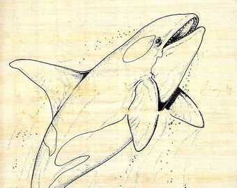 New! Color on Egyptian Papyrus-Killer Whale Design! Use paints, markers, crayons! Unique, creative art activity for kids! Markers available