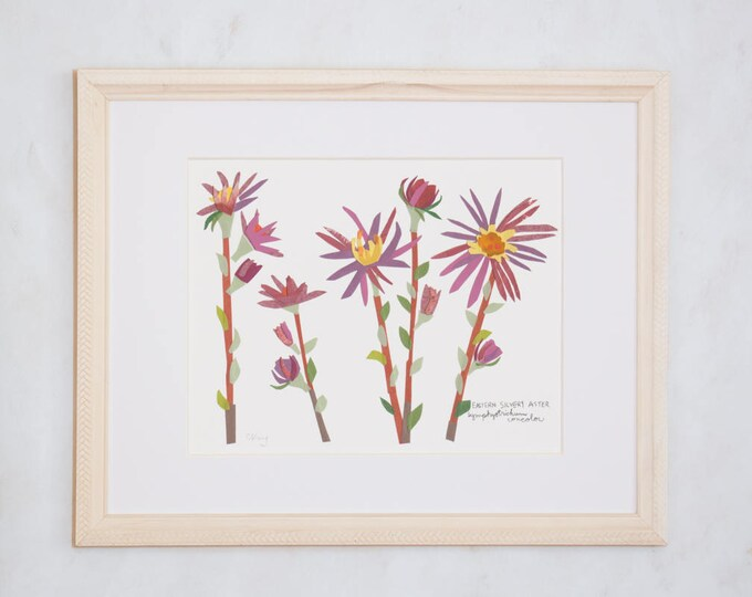 Art Print of Original Wildflower Collage- Eastern Silvery Aster Wildflower