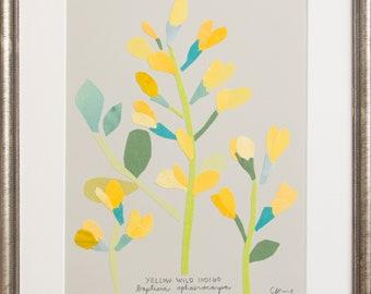 Art Print of Original Wildflower Collage- Yellow Wild Indigo Wildflower
