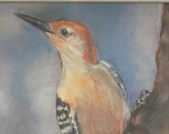 Red bellied woodpecker art print,from original pastel painting, giclee print,woodpecker art,bird art,matted to 11 x 14,home decor