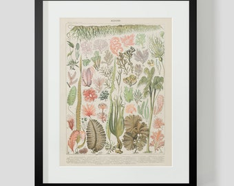 Plants and Algae Print