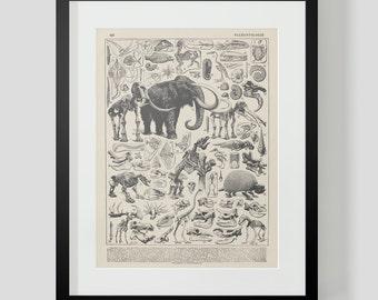 Vintage Dinosaur Skeletons French Print 2