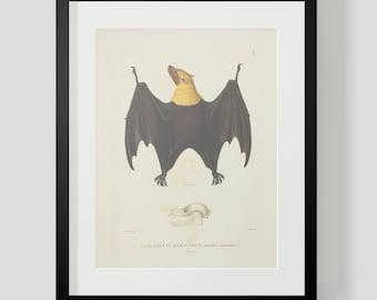 Vintage Bat Print Yellow Collar