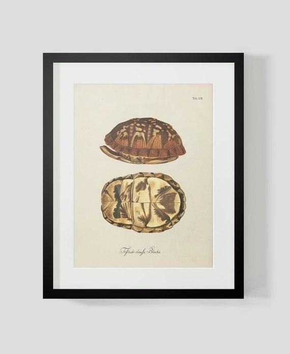 turtle shell print 7 etsy. Black Bedroom Furniture Sets. Home Design Ideas