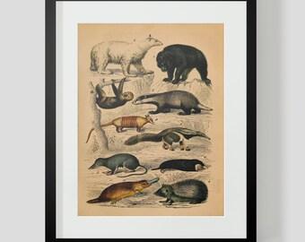 Vintage Animal Print Polar Bear Ant Eater Hedge Hog Plate 4
