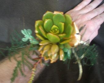 Growing Succulent Corsage