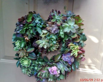 Summer Heart of Growing Color Succulent Plants Living Wreath succulent starts succulent cuttings succulent clippings
