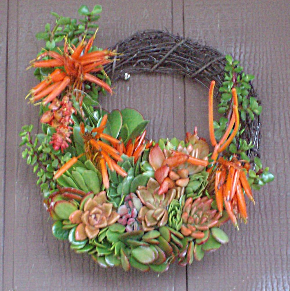 Christmas Holiday couleur 13 pouces saule Branches succulente plante plante plante vivant couronne spéciale coupe succulentes commencer découpage 328e6f