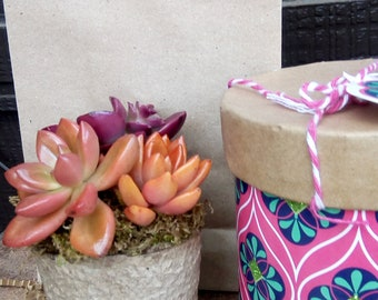Succulent Gift Package living succulent assorted patterns gift box colorful growing living  succulents your choice of colors and plants