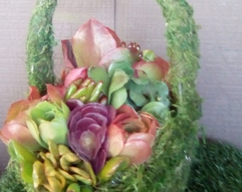 Bountiful Basket of Living Succulents for Weddings or Special Occasions