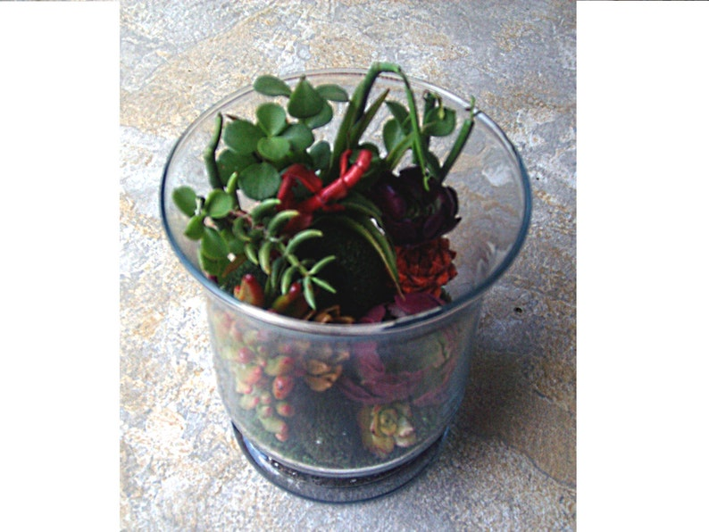 Living Color Under Glass Living Growing Succulent Plants Terrarium