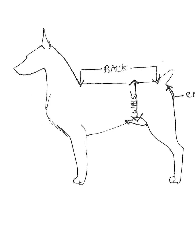 Dog Shoe Chart