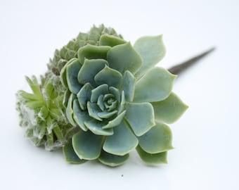 Hair Plant // Succulent Hair Pin