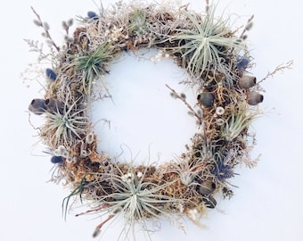 Living Wreath // No. 1 // Air Plant Tillandsia