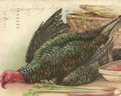 1906 UDB Antique Thanksgiving Postcard Tuck and Sons R J Wealthy Artist Signed – Turkey and Cranberries in Basket