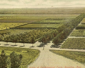 BRANDON Manitoba Scene at Experimental Farm Antique Postcard 1906 Great Birds Eye View Postcard