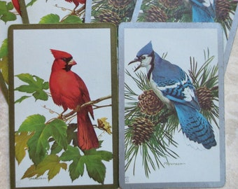 Bird Cardinal Blue Jay Die Cuts Scrapbook Cards Holiday Presents
