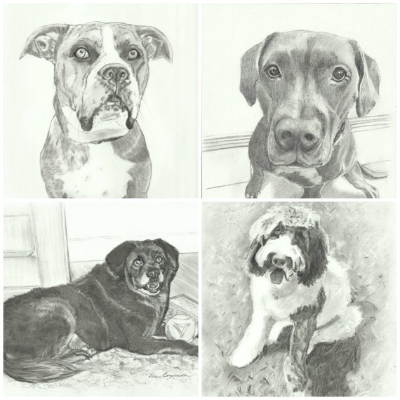 Pencil Portraits of Pets From Your Photos