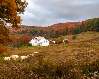 Classic Vermont Farm in Fall Print