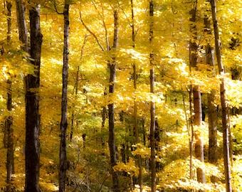 Yellow Maple Collage Print