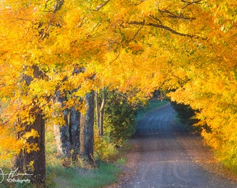 Tunnel of Fall Print