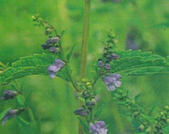 Channeling Elixir Lavender Herkimer Skullcap Blend