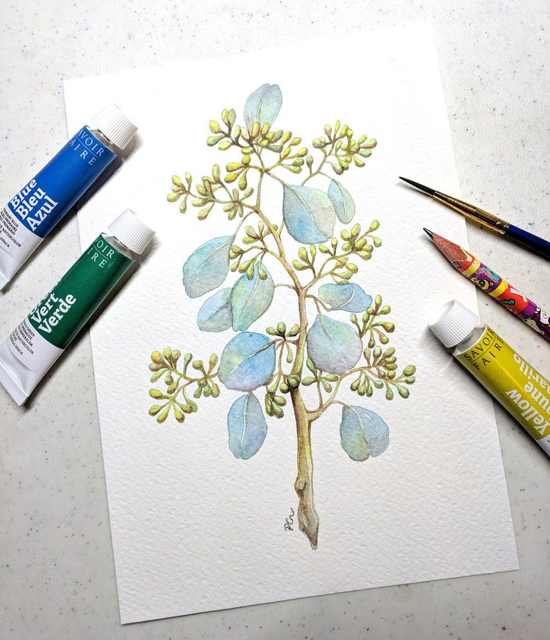 Original Watercolor Gouache Painting 5.75x8.25 inches  Seeded Eucalyptus 01  Foliage Botanical Illustration Art by Patricia