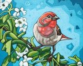 "Bird Art Print, 8"" x 8"" - House Finch and Blossoms"