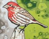 """Bird Art Print, 8"""" x 8"""" - House Finch"""