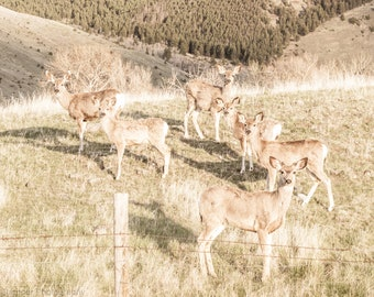 Field of Deer Rustic Farmhouse Print Cabin Farm House Wall Art Decor Vintage Country Mountain Photo Art Print or Canvas Wrap Gift for Her