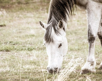White Mustang Horse Print Montana USA Country Wall Art Farm and Ranch Horse Lover Fine Art Photo Artwork Decor American Landscape on Canvas