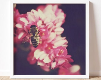 Bumble | Fine Art Photography Print | Nature Photography | Wall Art | Bumble Bee Decor | Multiple Sizes | Bee Lover | Flowers | Pink