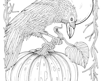 Fall Crow Digital Coloring Page Thanksgiving Harvest Adult Pages Book